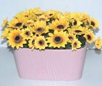 Chậu gốm cắm hoa
