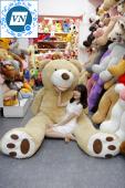 Teddy khổng lồ 2m