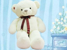 Teddy Lông Xù