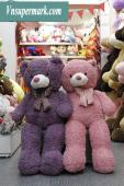 Teddy Xù 1m7